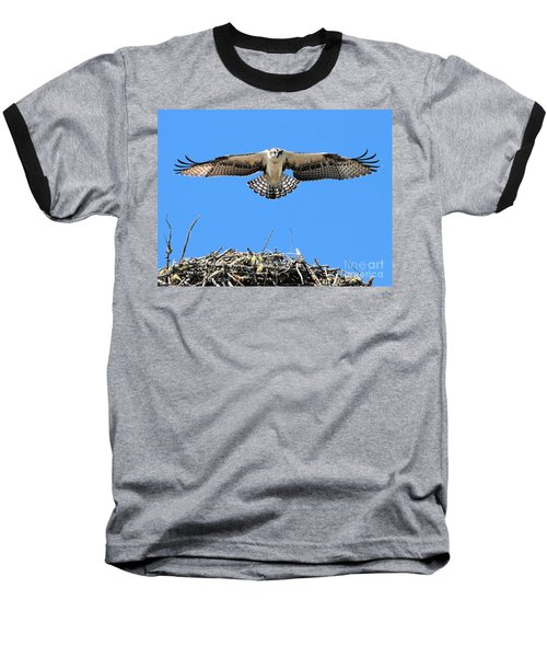 Baseball T-Shirt featuring the photograph Flegeling Osprey by Debbie Stahre