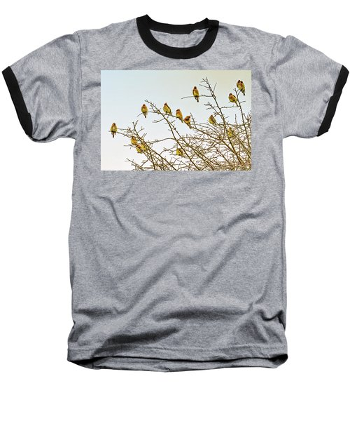 Flock Of Cedar Waxwings  Baseball T-Shirt by Geraldine Scull