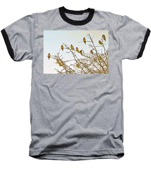 Flock Of Cedar Waxwings  Baseball T-Shirt