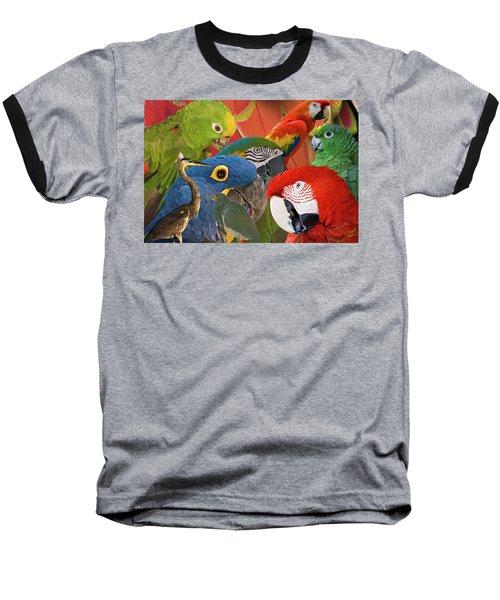 Florida Birds Baseball T-Shirt