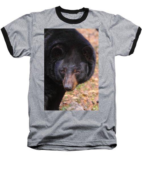 Florida Black Bear Baseball T-Shirt