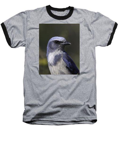 Florida Scrub Jay Baseball T-Shirt by Elizabeth Eldridge