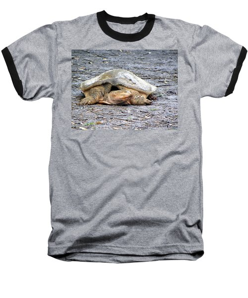 Baseball T-Shirt featuring the photograph Florida Softshell Turtle 001 by Chris Mercer