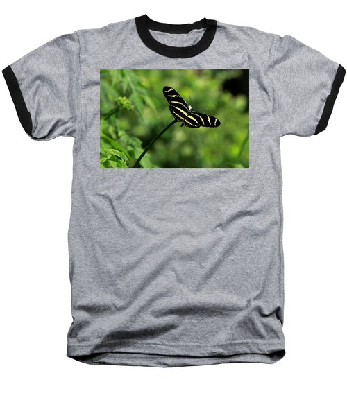 Florida State Butterfly Baseball T-Shirt by Greg Allore