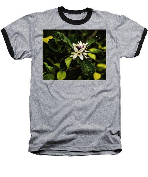 Flower Of The Lemon Tree Baseball T-Shirt
