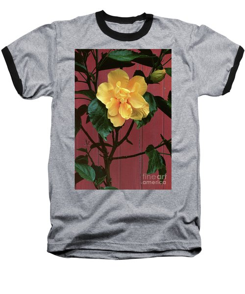 flower photographs - Yellow Rose Baseball T-Shirt