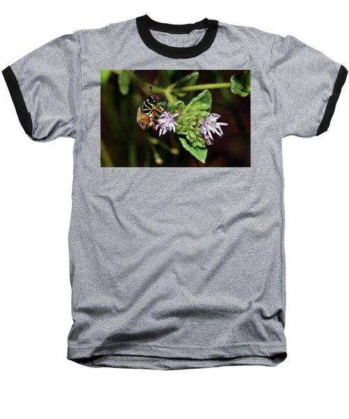 Flower Scarab - Trigonopeltastes Delta Baseball T-Shirt
