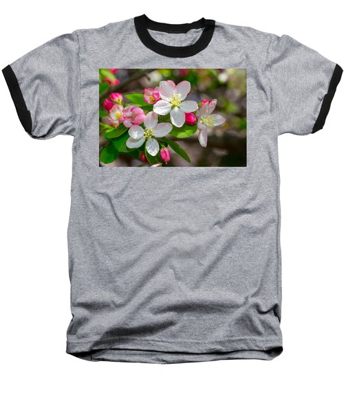 Flowering Cherry Tree Blossoms Baseball T-Shirt