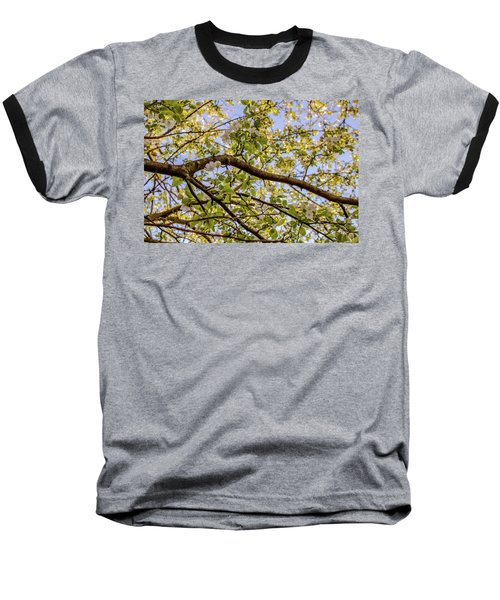 Flowering Crab Apple Baseball T-Shirt