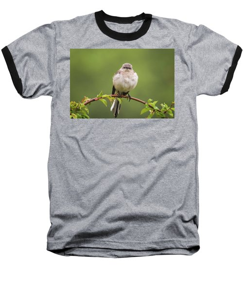 Fluffy Mockingbird Baseball T-Shirt by Terry DeLuco