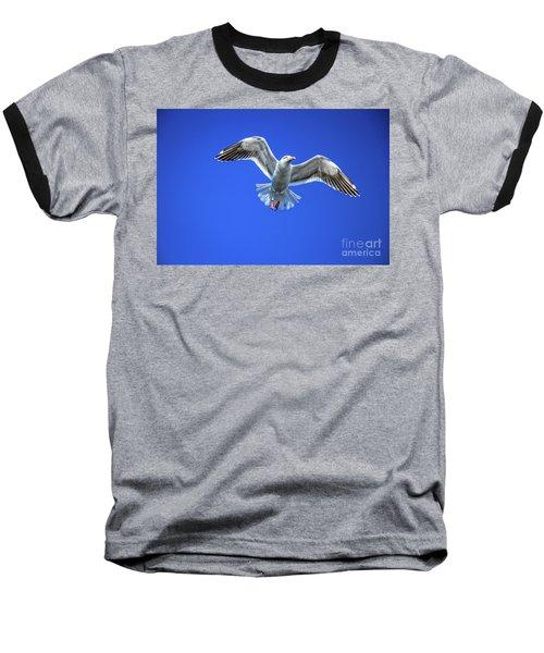 Flying Gull Baseball T-Shirt by Robert Bales
