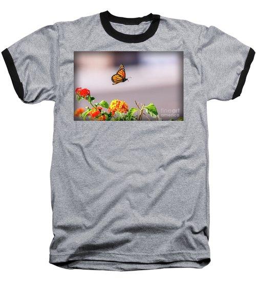 Flying Monarch Butterfly Baseball T-Shirt by Robert Bales