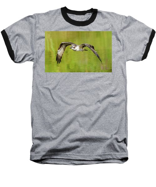 Flying Osprey Baseball T-Shirt by Jerry Cahill