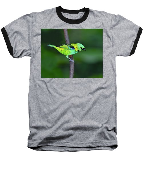 Forest Edge Baseball T-Shirt by Tony Beck