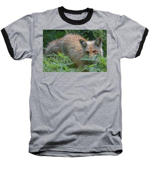 Fox In The Ferns Baseball T-Shirt