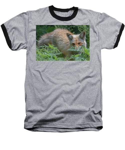 Fox In The Ferns Baseball T-Shirt