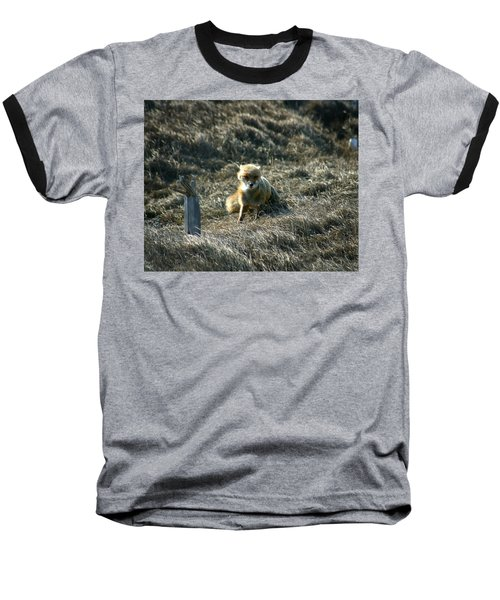 Fox In The Wind Baseball T-Shirt by Anthony Jones