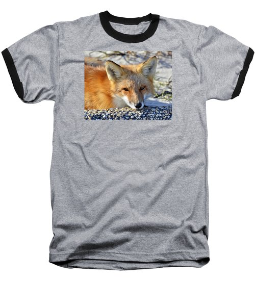 Baseball T-Shirt featuring the photograph Fox Posing For Me by Sami Martin
