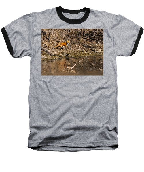 Baseball T-Shirt featuring the photograph Fox Walk by Edward Peterson
