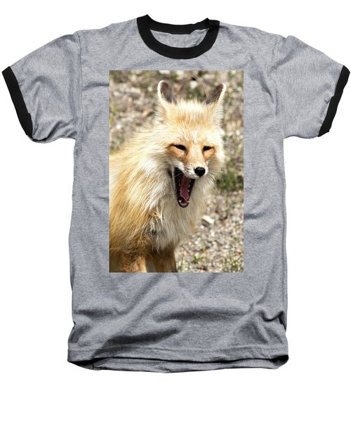 Fox Yawn Baseball T-Shirt