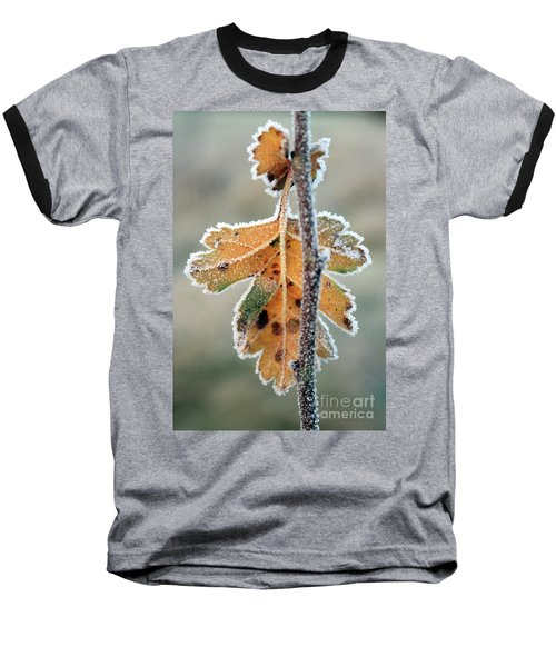 Frosty Leaf Baseball T-Shirt