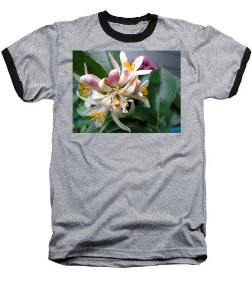 Fruit To Bear Baseball T-Shirt