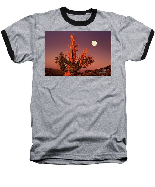 Full Moon Behind Ancient Bristlecone Pine White Mountains California Baseball T-Shirt by Dave Welling