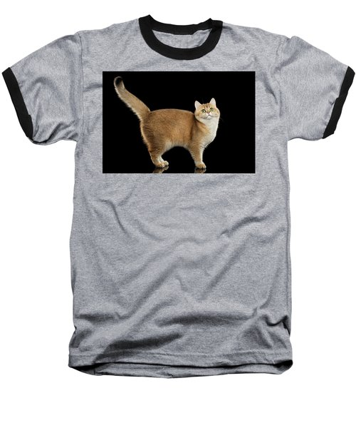 Funny British Cat Golden Color Of Fur Baseball T-Shirt