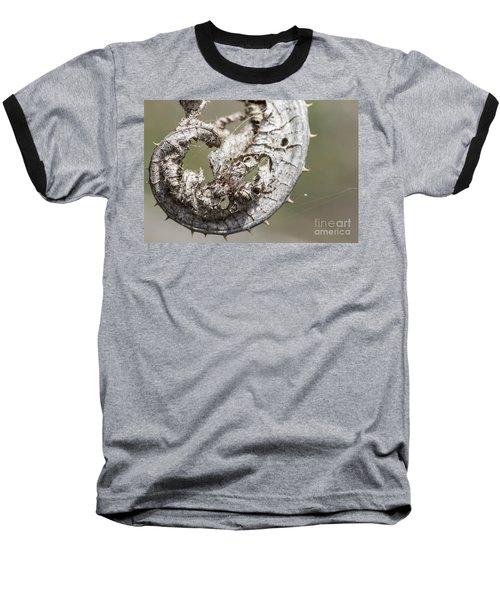 Baseball T-Shirt featuring the photograph Furrow Orb Weaver On A Dry Thisle Leaf by Jivko Nakev