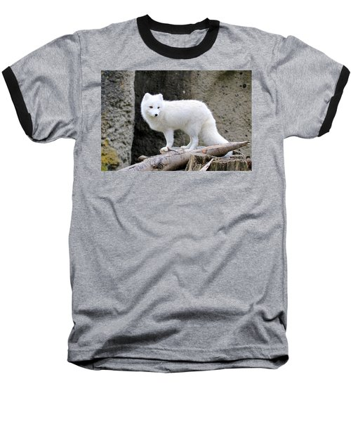 Furry Arctic Fox  Baseball T-Shirt by Athena Mckinzie