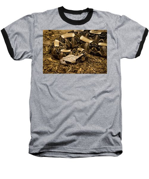 Gaboon Viper Resting 2 Baseball T-Shirt