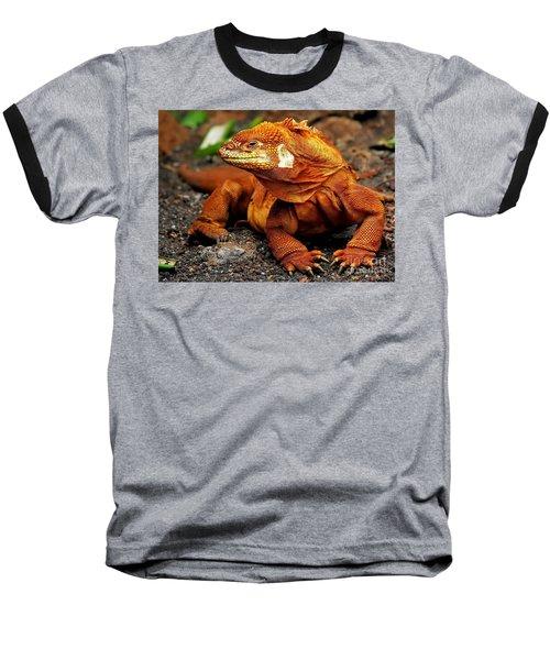 Galapagos Iguana Baseball T-Shirt by Rod Jellison