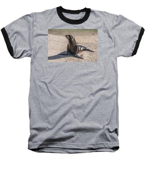 Galapagos Sea Lion Baseball T-Shirt
