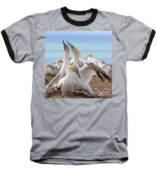 Baseball T-Shirt featuring the photograph Gannets by Werner Padarin