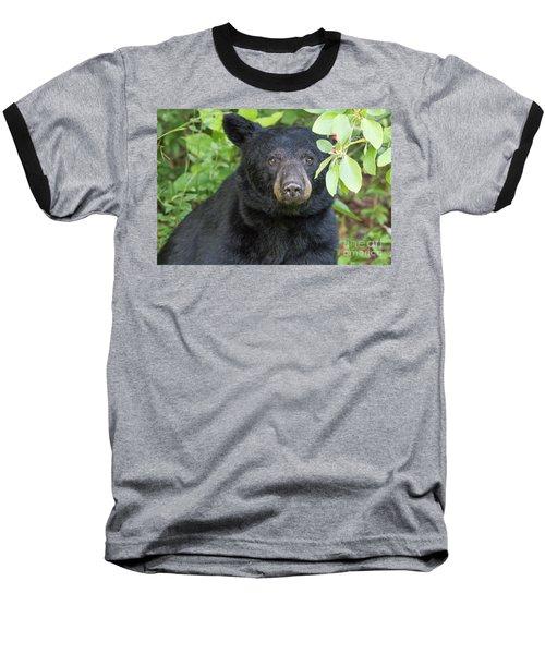 Gazing Black Bear Baseball T-Shirt