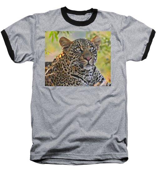 Gazing Leopard Baseball T-Shirt