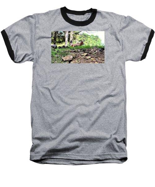 Georgia Mountain Goat At Rest Baseball T-Shirt by James Potts
