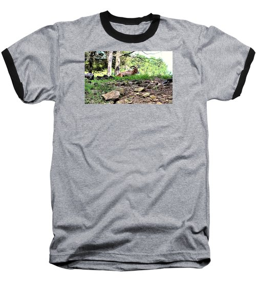 Georgia Mountain Goat At Rest Baseball T-Shirt