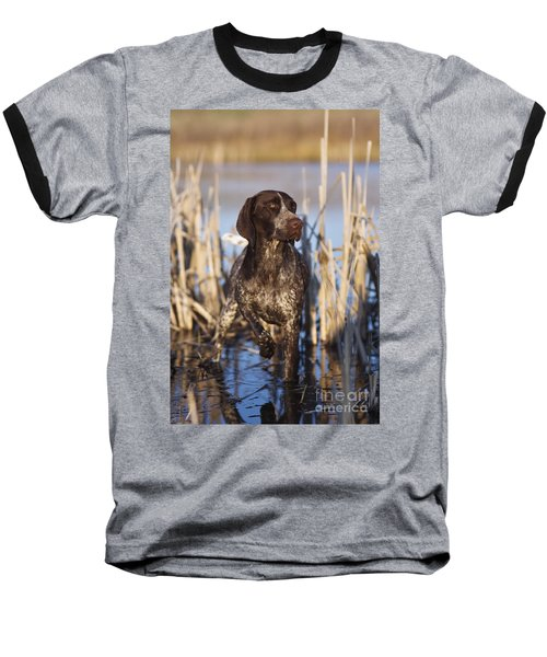 German Shorthair On Point -  D000897 Baseball T-Shirt by Daniel Dempster