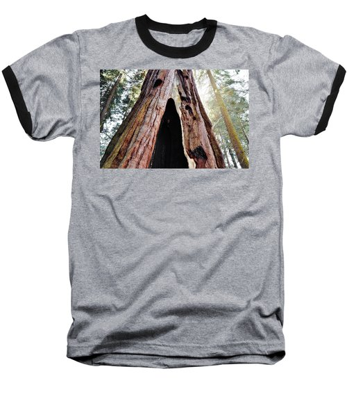 Giant Forest Giant Sequoia Baseball T-Shirt by Kyle Hanson