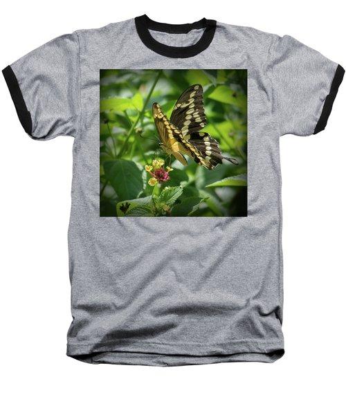 Giant Swallowtail On Lantana Baseball T-Shirt