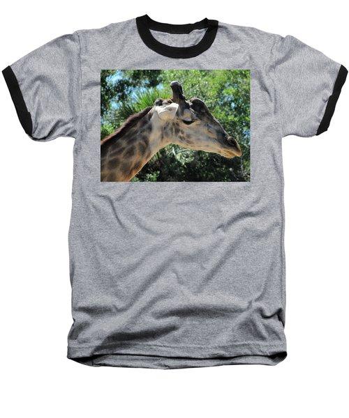 Giraffe  Baseball T-Shirt by Chris Mercer