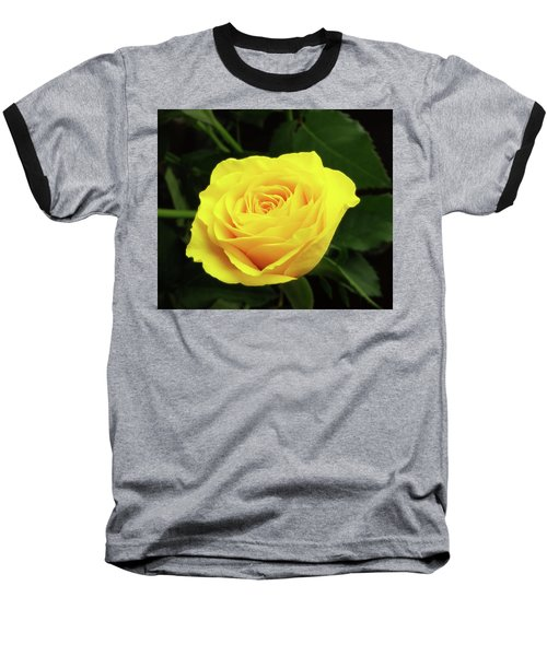 Glorious Yellow Rose Baseball T-Shirt