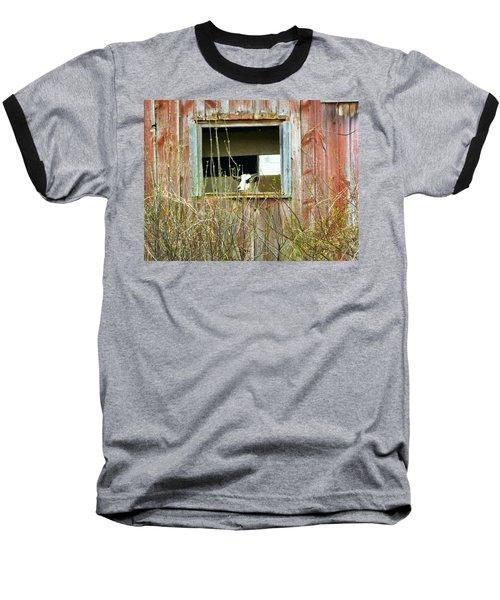 Goat In The Window Baseball T-Shirt by Donald C Morgan