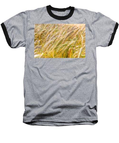 Golden Barley. Baseball T-Shirt