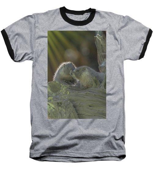 Golden Bellied Marmot Baseball T-Shirt