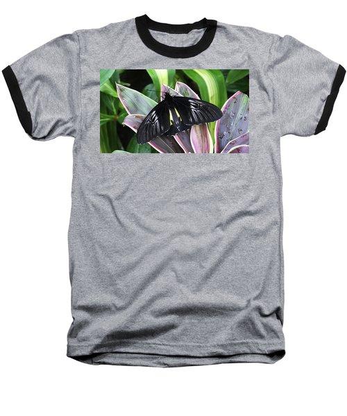 Golden Birdwing Baseball T-Shirt