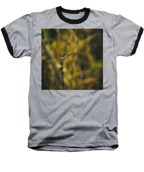 Golden Drangonfly Baseball T-Shirt by Cesare Bargiggia