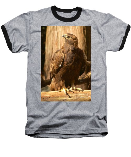 Golden Eagle Baseball T-Shirt by Sean Griffin