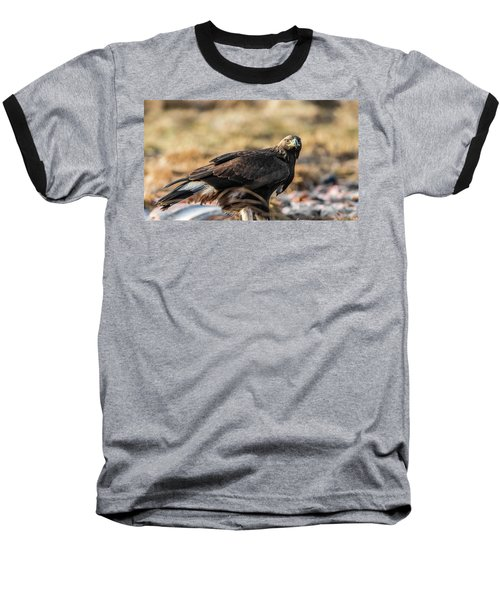 Golden Eagle's Glance Baseball T-Shirt by Torbjorn Swenelius